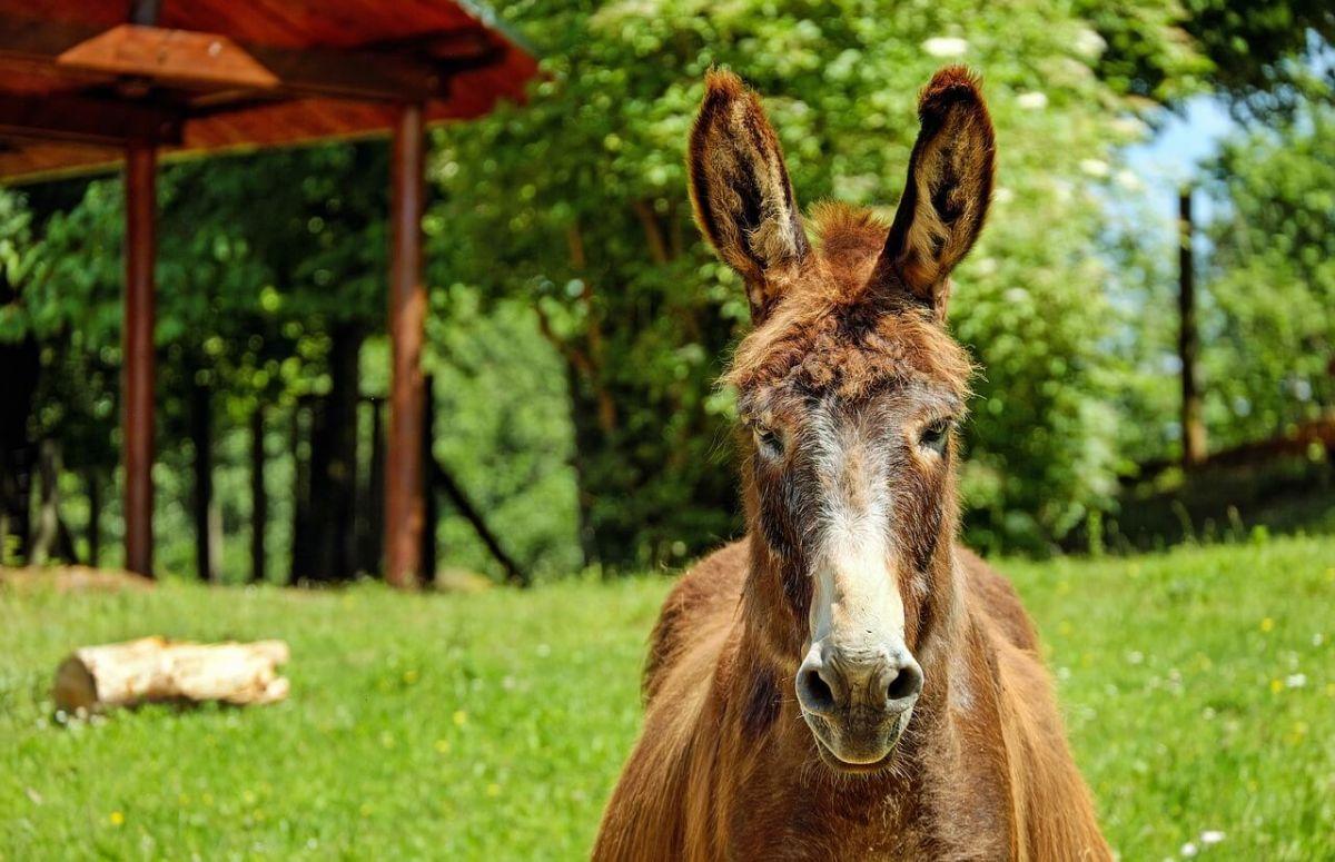 donkey-1449146_1280 (1)