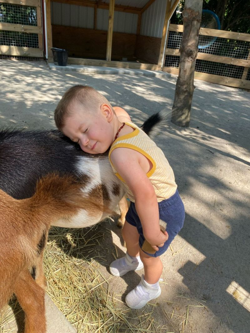 Jack has to hug ALL the goats at the zoo